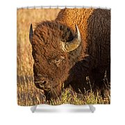 Bison Potrait At Teh Elk Ranch In Grand Teton National Park Shower Curtain