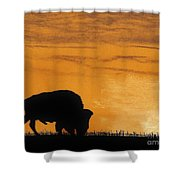Bison Sunset Shower Curtain