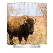 Bison Tall Grass Shower Curtain