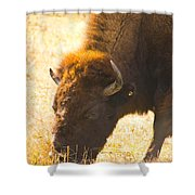 Bison Wander Shower Curtain