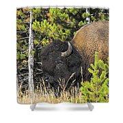 Bison's Portrait Shower Curtain