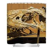 Bistahieversor Dinosaur Skull Fossil Shower Curtain