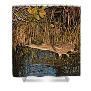 Bittern Stretched Out Shower Curtain