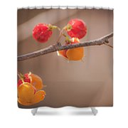 Bittersweet Dream Shower Curtain