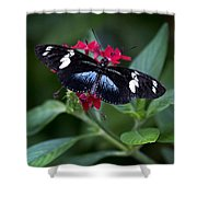 Black And Blue Butterfly Shower Curtain