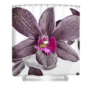 Black And Purple Orchid Shower Curtain