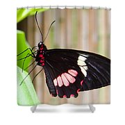 Black And Red Cattleheart Butterfly Shower Curtain