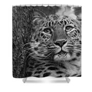Black And White Amur Leopard Shower Curtain