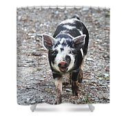 Black And White Baby Pig Shower Curtain