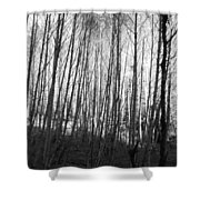 Black And White Birch Stand Shower Curtain