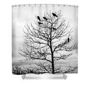 Black And White Blackbirds  Shower Curtain