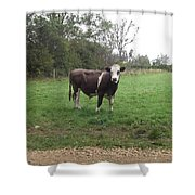 Black And White Bull Shower Curtain