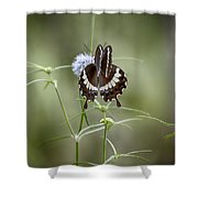 Black And White Butterfly V2 Shower Curtain