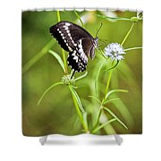 Black And White Butterfly V3 Shower Curtain