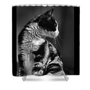 Black And White Cat In Profile  Shower Curtain