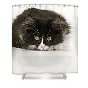 Black-and-white Cat Shower Curtain