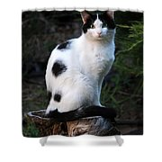 Black And White Cat On Tree Stump Shower Curtain