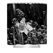 Black And White Daffodil Shower Curtain