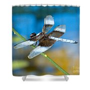 Black And White Dragonfly Shower Curtain
