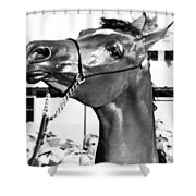 Black And White Horse Head Shower Curtain