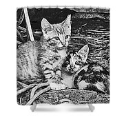 Black And White Kittens Shower Curtain