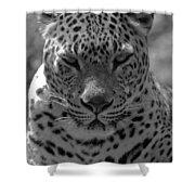 Black And White Leopard Portrait  Shower Curtain