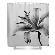 Black And White Lily Shower Curtain