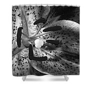 Black And White Lily Up Close Shower Curtain
