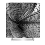 Black And White Lily Z Map L Shower Curtain