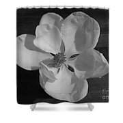 Black And White Magnolia Blossom Shower Curtain