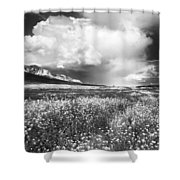 Black And White Meadow Shower Curtain