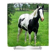 Black And White Paint Horse Shower Curtain