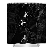 Black And White Quad Ghost Orchid Shower Curtain
