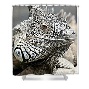 Black And White Saurian Animal Nature Iguana Shower Curtain