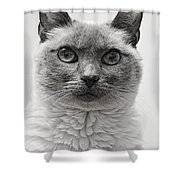 Black And White Siamese Cat Shower Curtain