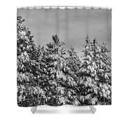 Black And White Snow Covered Trees Shower Curtain