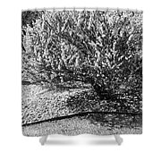 Black And White Spring Shower Curtain