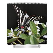 Black And White Swallowtail Square Shower Curtain