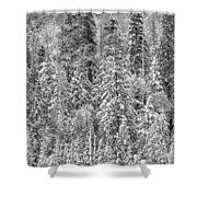 Black And White Trees In A Forest Shower Curtain