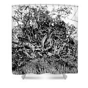 Black And White Uprooted Tree Shower Curtain