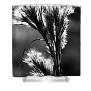 Black And White Vegetation In The Dunes Shower Curtain