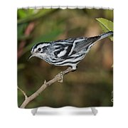 Black And White Warbler Shower Curtain