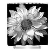 Black And White Zennia Shower Curtain