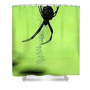 Black And Yellow Argiope - Spider Silhouette 02 Shower Curtain