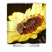 Black And Yellow Bee Beauty Shower Curtain