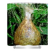 Black And Yellow Garden Spider Egg Sac Shower Curtain