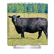 Black Angus Cattle Shower Curtain