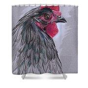 Black Australorp Hen Shower Curtain