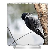 Black-backed Profile Shower Curtain