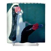 Black Beaked Swans Shower Curtain